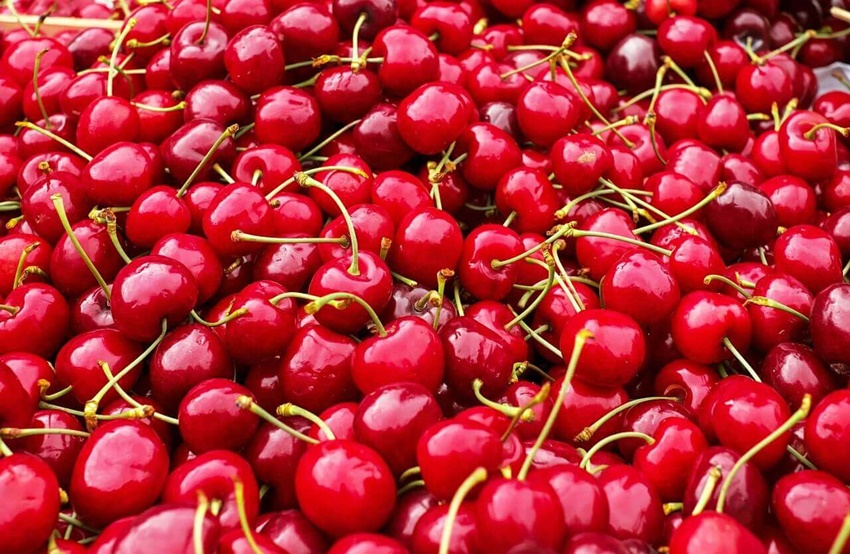 Zreli plodovi trešnje na gomili