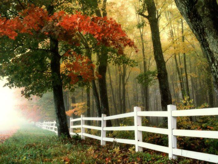 Ograde za dvorište u par jednostavnih  koraka