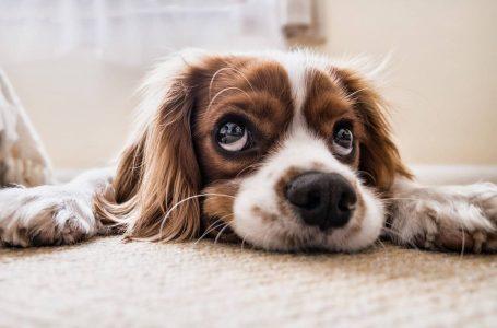 Kako održavati tepih ako u domu imate kućnog ljubimca?